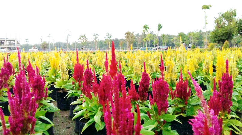 สูดอากาศเต็มปอดจากมวลดอกไม้