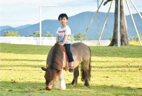ม้าแคระเชทแลนด์