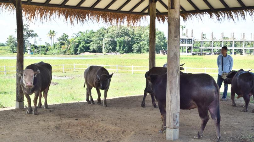 สัตว์เลี้ยงภายในฟาร์ม